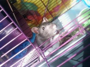 Rita, my rat