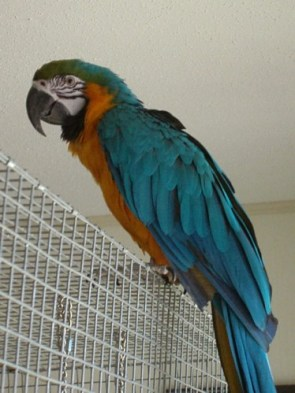 My Macaws