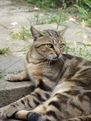 My Pet cat – Marsik