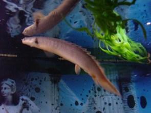My Pet Fish and Scorpion – Fishy and Mordechai