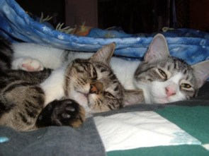 My pet cat(s)– Keyto and Farva