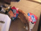 My Pet Cat (Frank) Dog (Isabel) Cats (Ahmit & Sparky) and PowerTurtle (Alan)