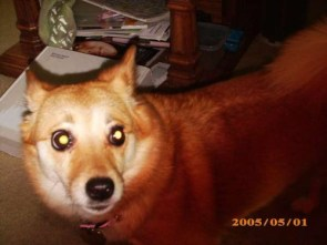 My dog, Pu-chan