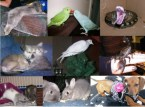 My Pets and Rescues