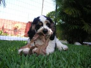 My dog Nino
