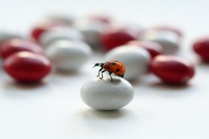 Ladybuggin'