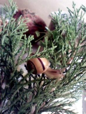 My Pet Snail Gary