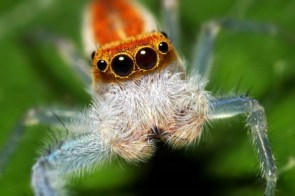 Spiders and spiders and spiders…oh my