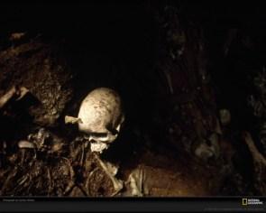Human Skull, Peru, 2000