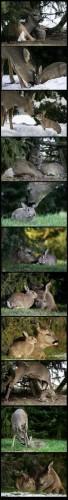 Real Life Bambi & Thumper