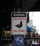 64 Beware The Homocidal Pigeons.jpg