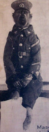 Jackie, mascot of the 3rd south african infantry regiment