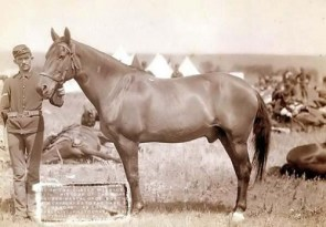 Comanche, Only US Army Survivor From Little Big Horn Battle