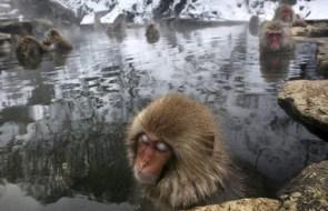 Ice Ice Monkey