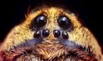 Sad Spider