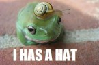 Frog with snail hat