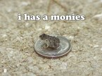 Dime frog