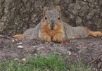 Sexy Squirrel