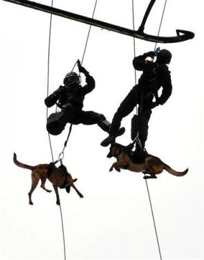 Indonesian Special Forces K-9 Unit