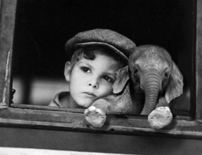 Day Dreaming With His Pet Elephant