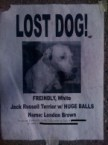 Lost Dog with HUGE Balls