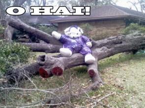 O Hai! – Ike Teddy Bear