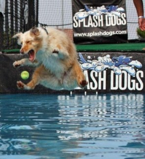 Splash Dog