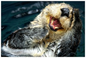 You make Otter laugh!