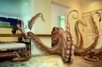 Octopus In The Living Room