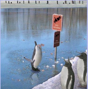 No Diving Penguins