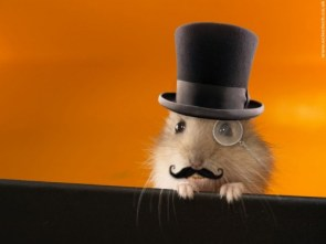 Proper Hamster Gentleman