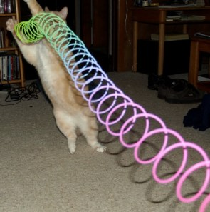 Slinkies will eat your pets