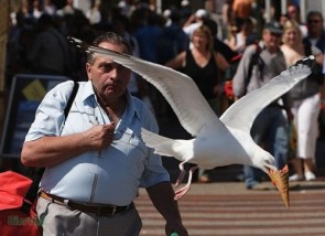 Birds Stealing Ice Cream