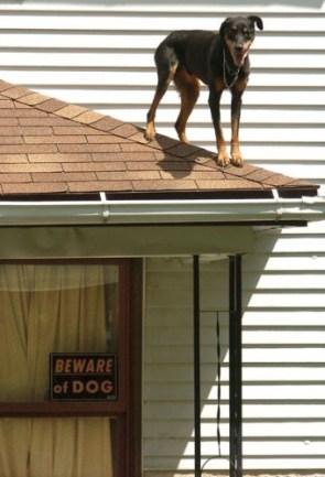 Beware of the Ninja-Dog