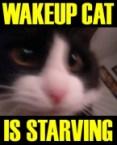 Wakeup Cat