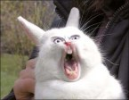 Rabbit rage