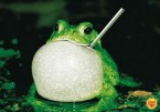 RPB – Really Proud Bullfrog