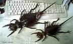 RPB – REALLY Putrid Bugs