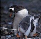 Rad Penguin Bowel (movement)