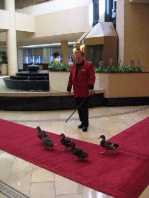 Royal Peabody Birds