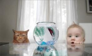 Baby, Cat, Fish