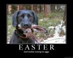 No Bunny