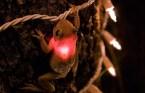 Iluminated Frog