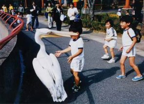 Hello Mr. Pelican !