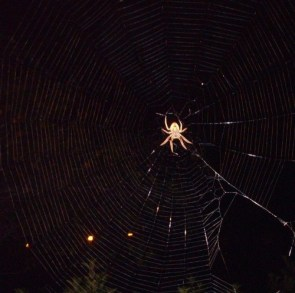 Spider in my driveway