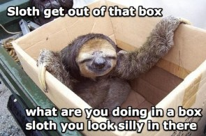 SILLY SLOTH