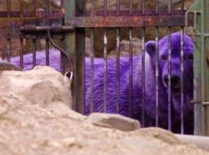 Purple Polar Bear