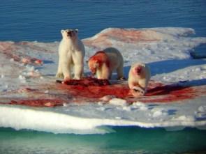 Polar Bear Murder
