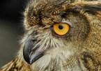 Owl!!