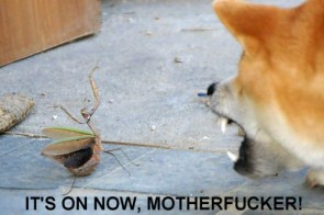 Badass Mantis – It\'s on now!